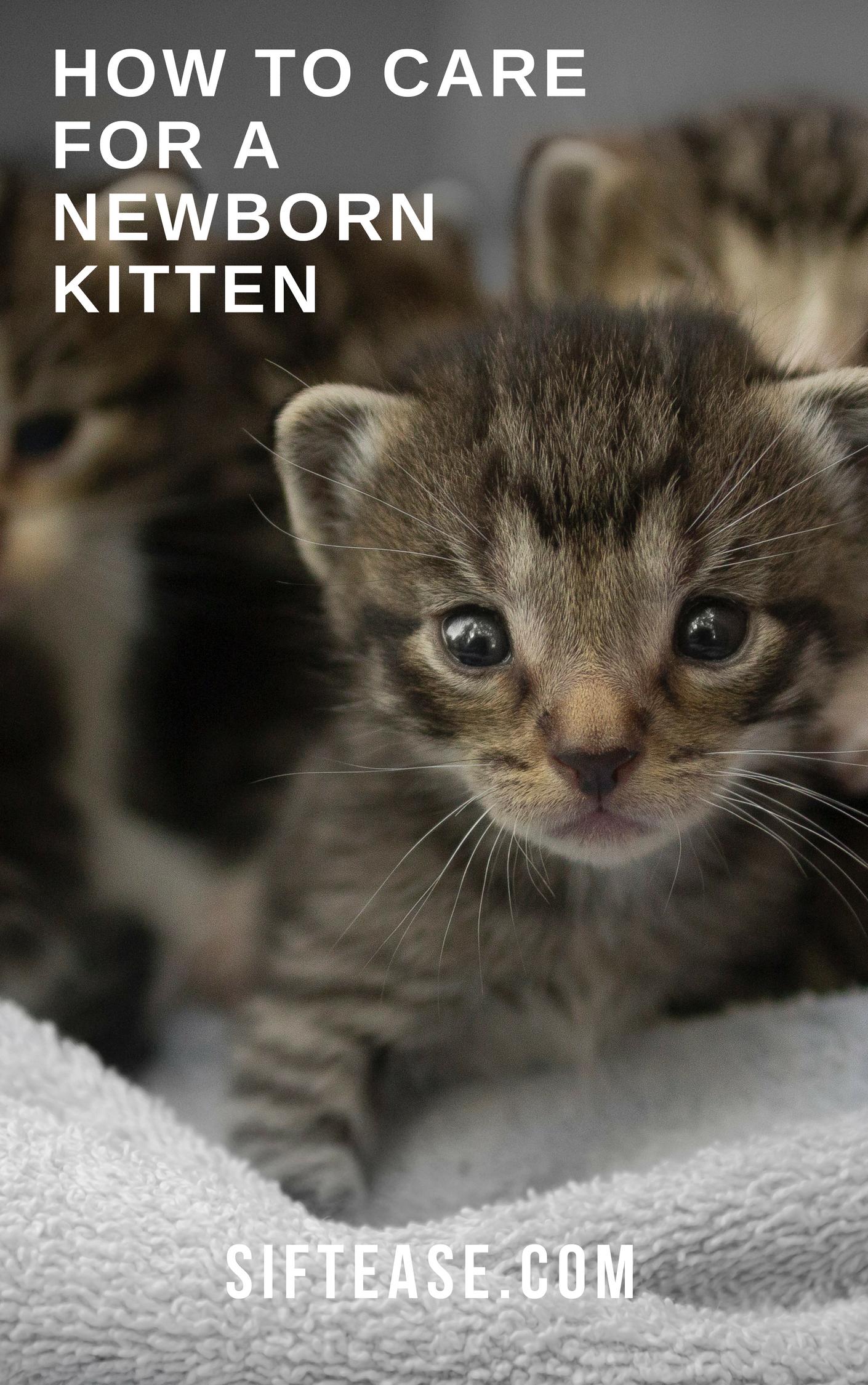 How To Care For a Newborn Kitten Newborn kittens