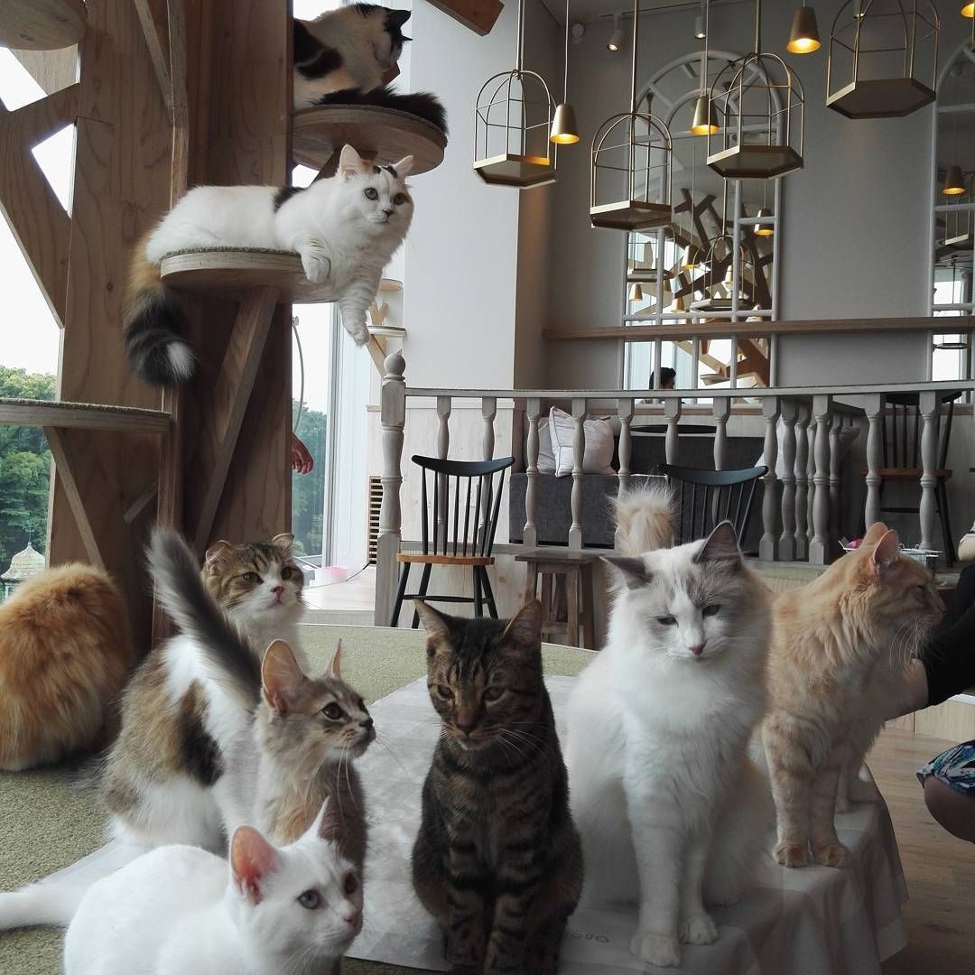 8 Best Cat Cafe in Tokyo to Hang Out | Hub Japan