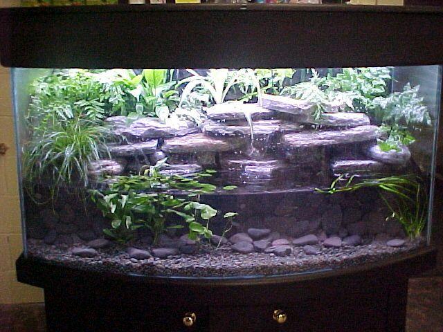 36634 Your Tanks Live Plants Homemade Backgrounds 3d Alcove Low Water Aquarium Jpg 640 480 Axolotl Tank Planted Aquarium Aquarium
