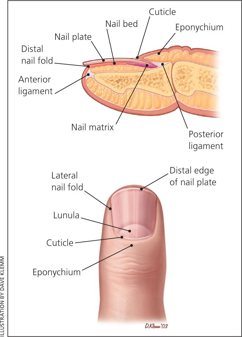 hight resolution of evaluation of nail abnormalities american family physician