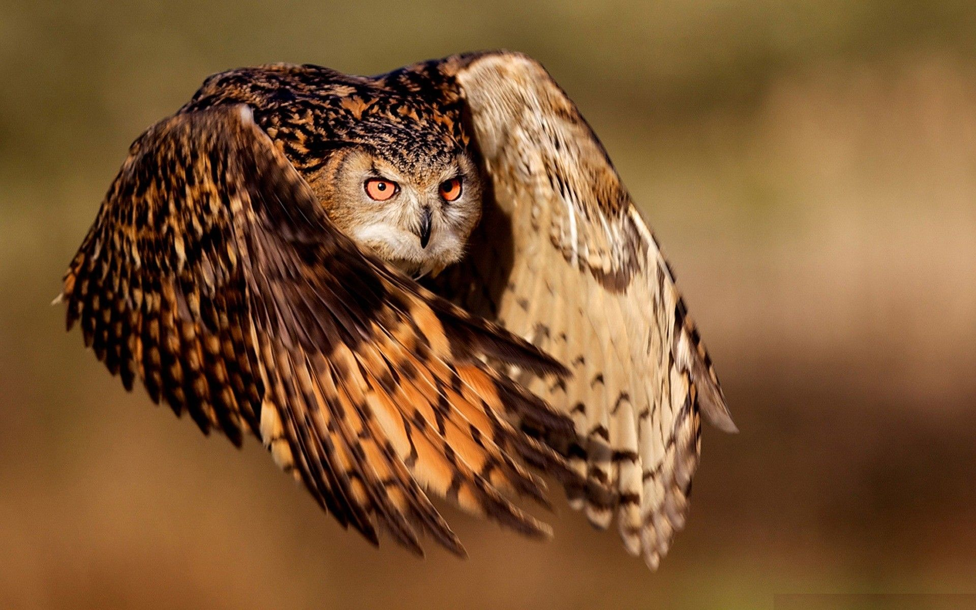 Bird Owl Wings wallpaper
