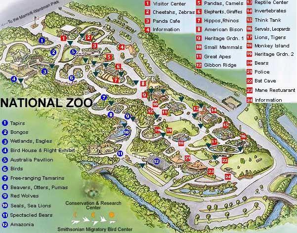 National zoo map giraffe on zoo atlanta map, national zoo park map, florida zoo map, simple zoo map, oklahoma city zoo map, cincinnati zoo map, smithsonian museum zoo, national zoo asia trail map, nashville zoo map, smithsonian national history, virginia zoo map, aquarium of the pacific map, zoo new england map, smithsonian mall map, smithsonian national archives map, national zoo washington dc map, smithsonian natural history museum floor plan, binghamton zoo map, national mall museum map,