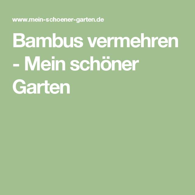 Bambus Vermehren Garten Pinterest