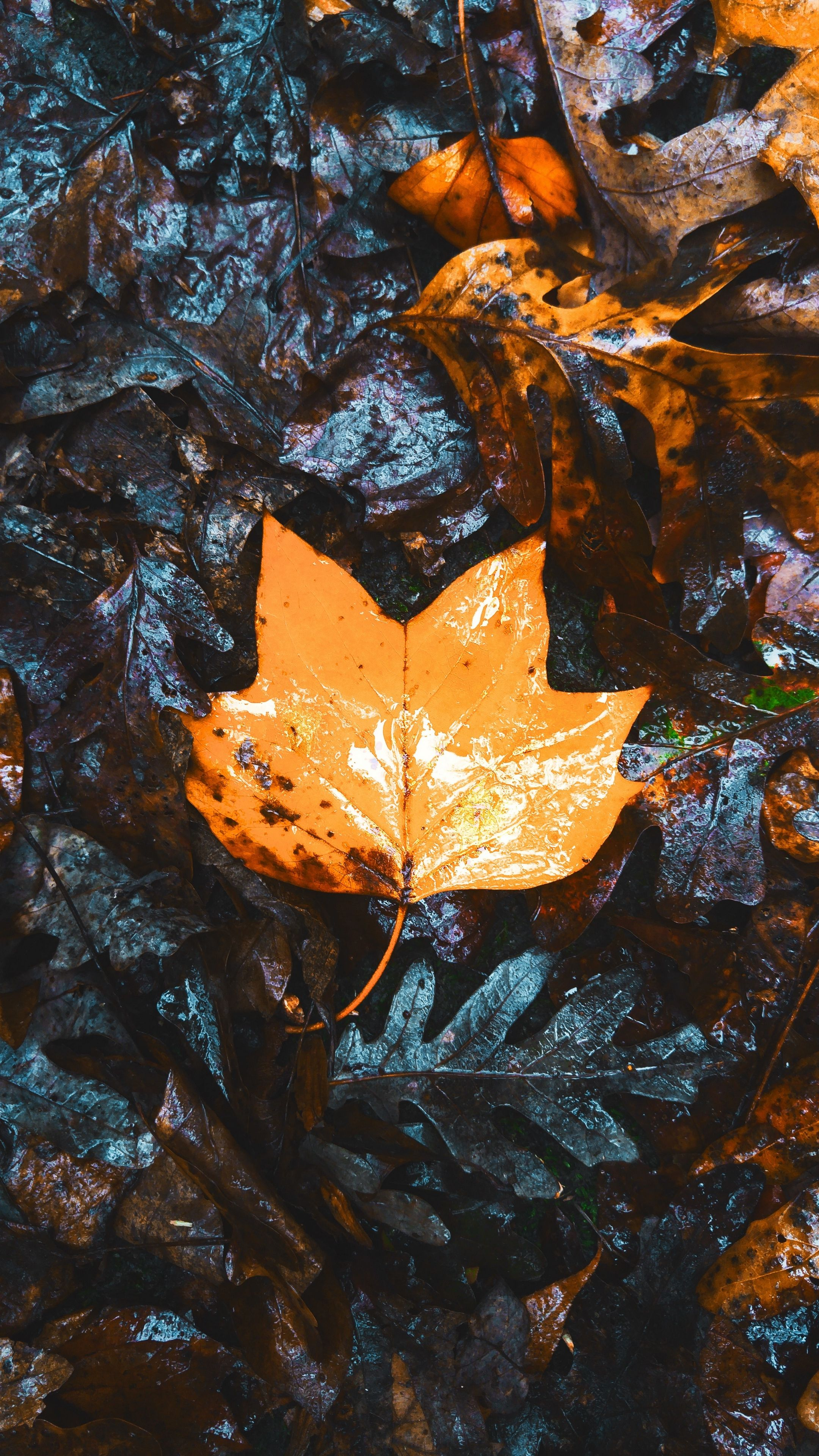 Nature Maple Leaves Autumn Wallpapers Hd 4k Background For Android Christmas Wallpaper Iphone Tumblr Iphone Wallpaper Vintage Wallpaper Iphone Summer