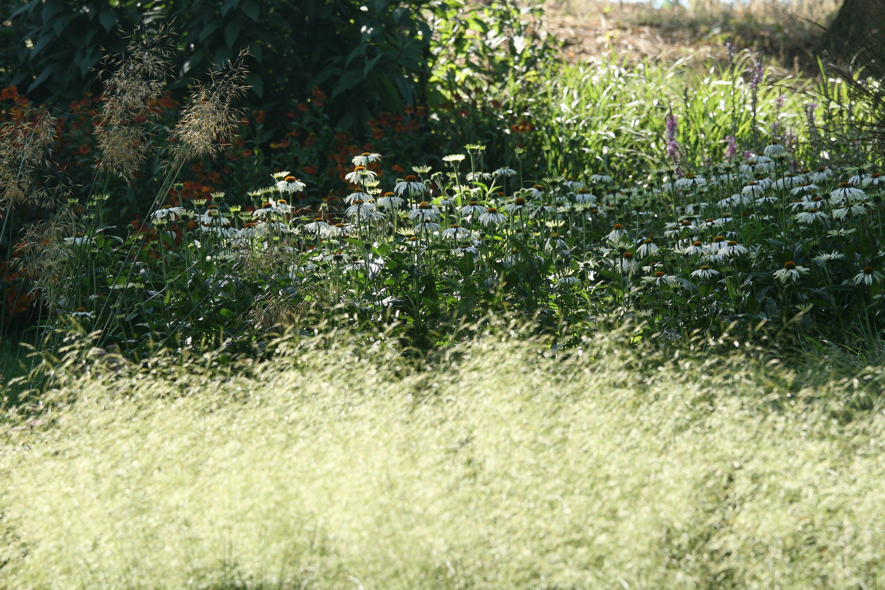 Naturalistic Planting Using Grasses