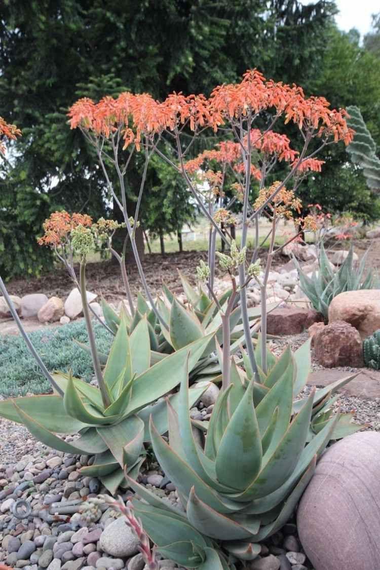 Plantes Et Amenagement Jardin Mediterraneen 79 Idees Du Jardin