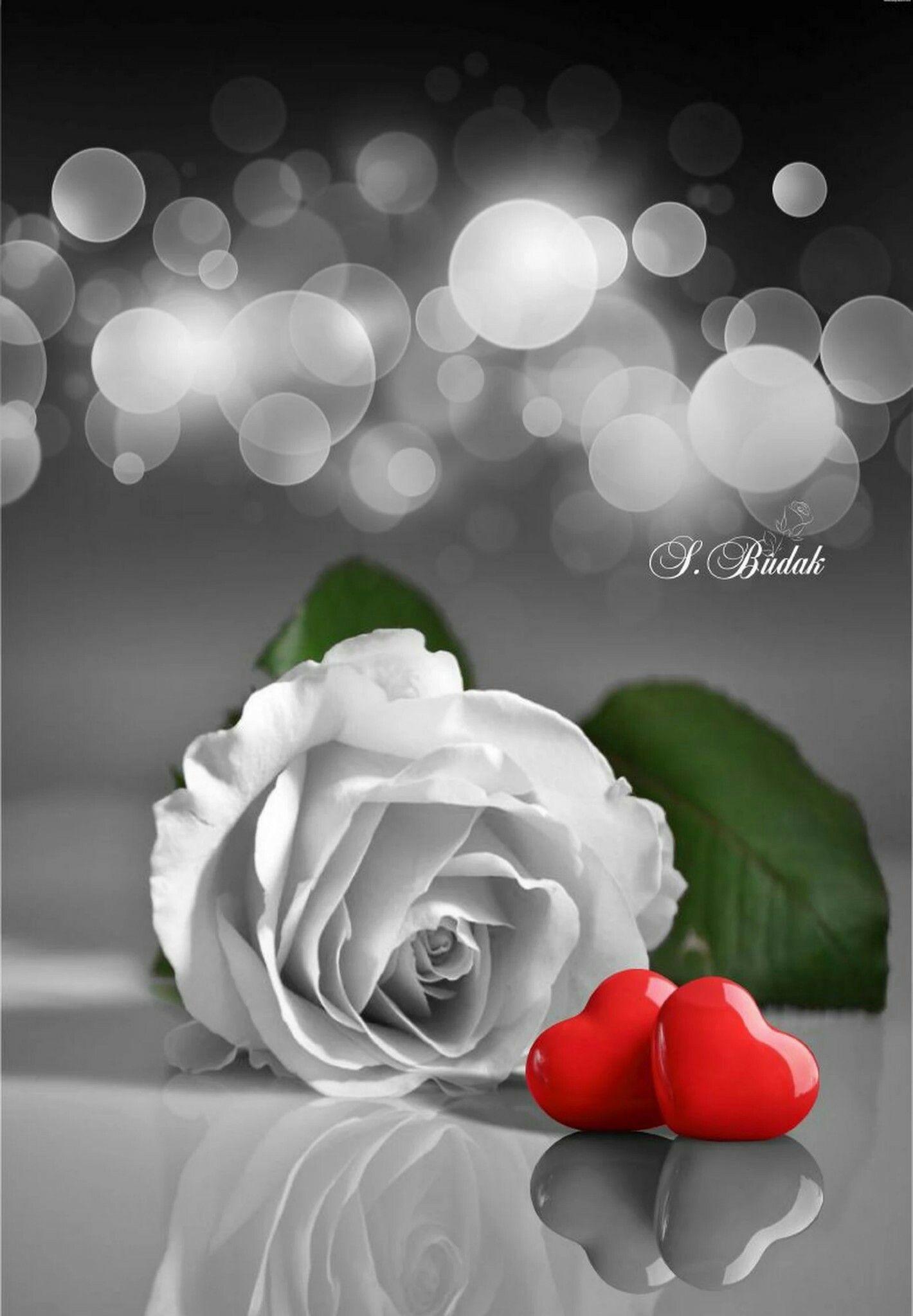 Pin De Marta Laje En Sabri Budak Color Splash Pinterest Rosas