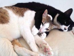 Elio 7 Months Happy Boy Neutered Vaccinated Kitten Adoption
