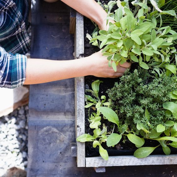 10 Reasons to Grow Your Own Healing Herb Garden is part of Patio Herb garden - Your tastebuds will thank you