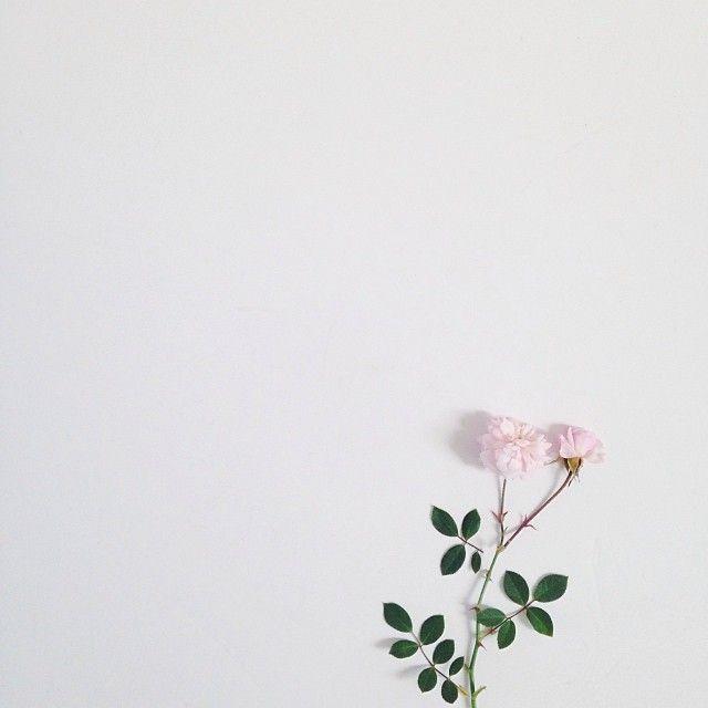Minimal Pink Roses Lukisan Bunga Mawar Putih Bunga Peony
