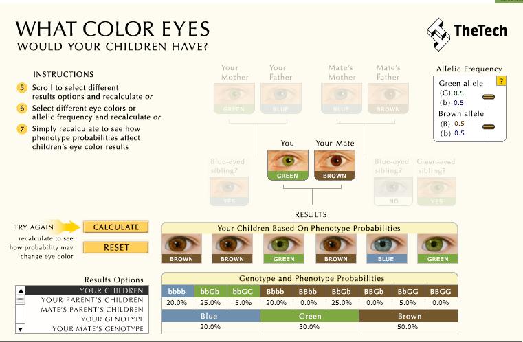 What Color Eyes Genetic Simulator Properly Using Eye Genes As Polygenic Traits Genetica Ensinar Cores