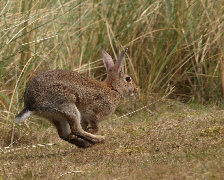 факторы влияют картинка беги кролик беги перед тем, как