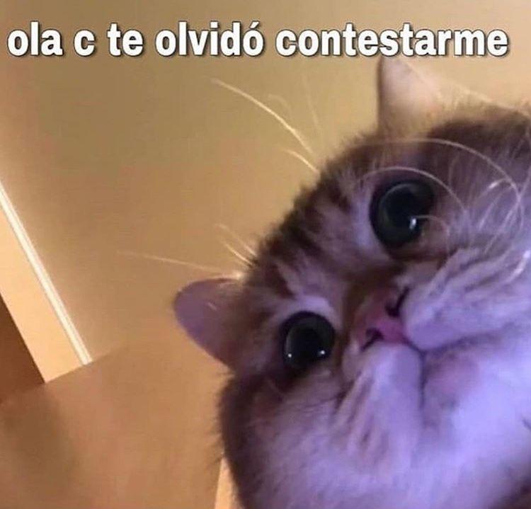 Pin En Gatos Bonitos
