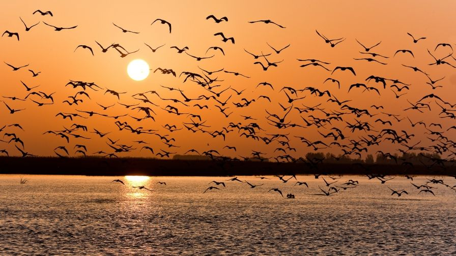 Flying Birds Sea Sunset Wallpaper Hd Download Free Sunset Wallpaper Sunset Birds Flying