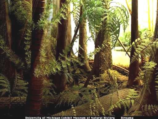 junglespourpres / forêt / jungle / lumière / nature