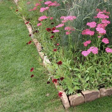 Beeteinfassung - Material, Anlegen und Tipps Beeteinfassung - bauerngarten anlegen welche pflanzen