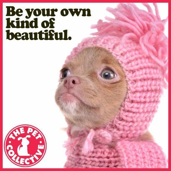 Ugly puppy says weird is beautiful