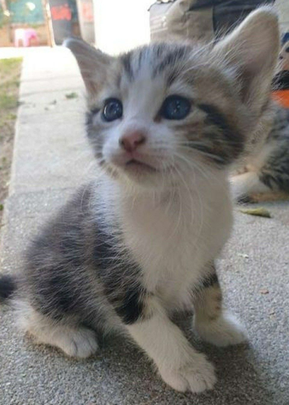 Pin By Judy Diamond On Chaton Trop Mignon In 2020 Cute Cats And Kittens Cute Cats Photos Kittens