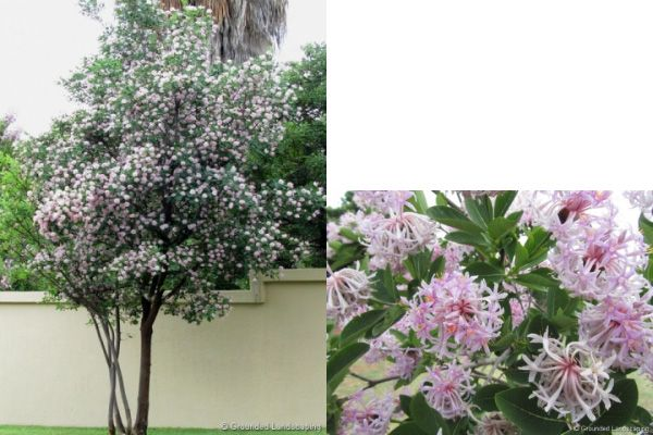 Top 10 Trees To Plant In A Small Garden Diy Trees To Plant