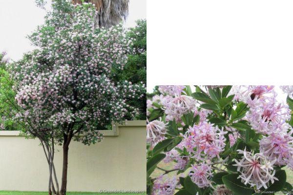 2b3bd34b25c43f85b135a08917335a62 - Trees For Small Gardens South Africa