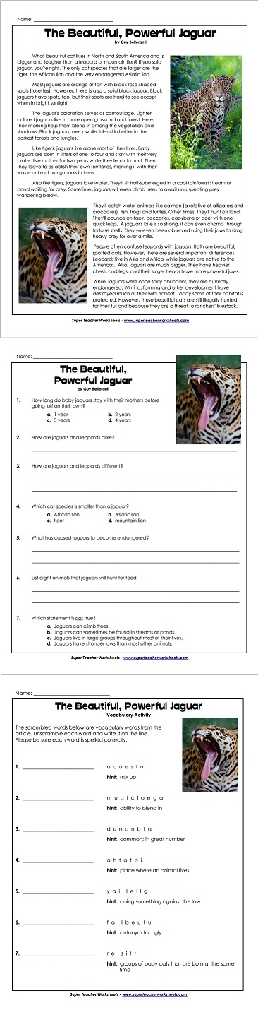 Learn all about the magnificent jaguar in this animal