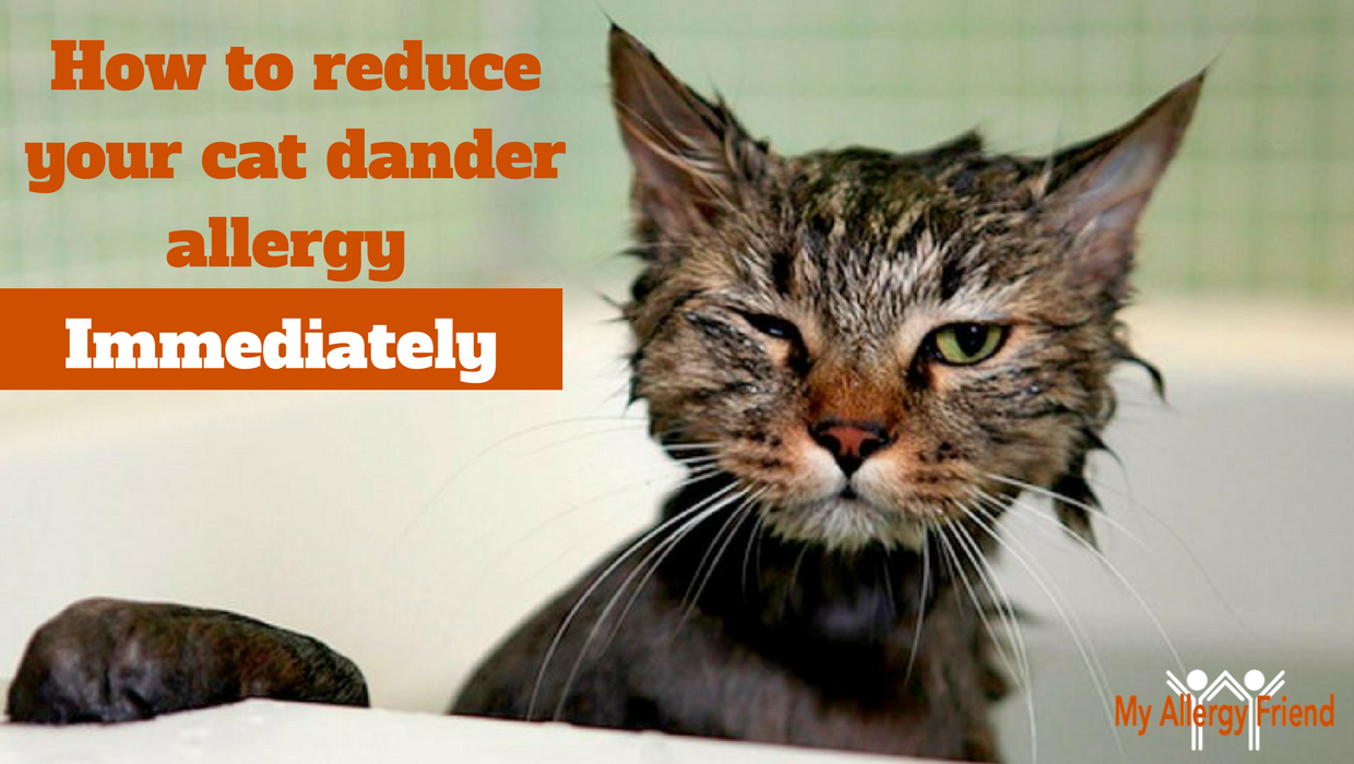 Yes, it's true. You can reduce your cat allergy symptoms