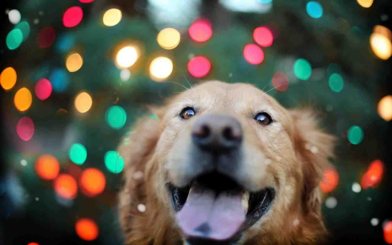 Christmas Golden Retriever Wallpaper Dogs Golden Retriever