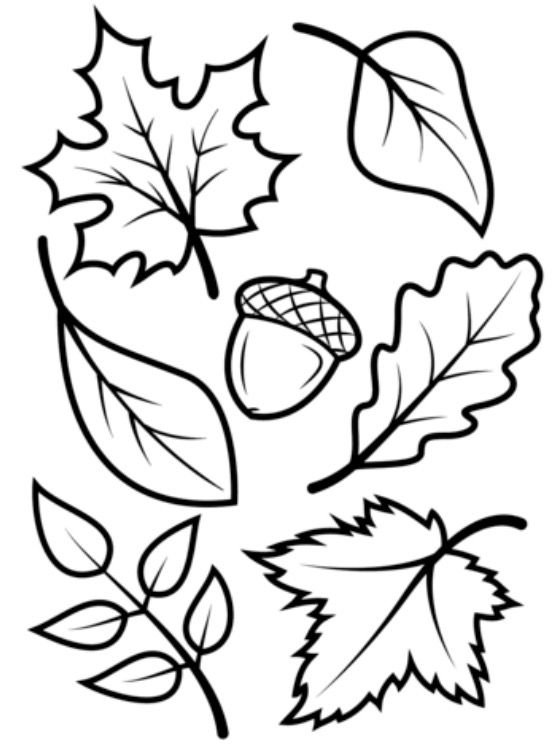 fall leaves coloring page # 13