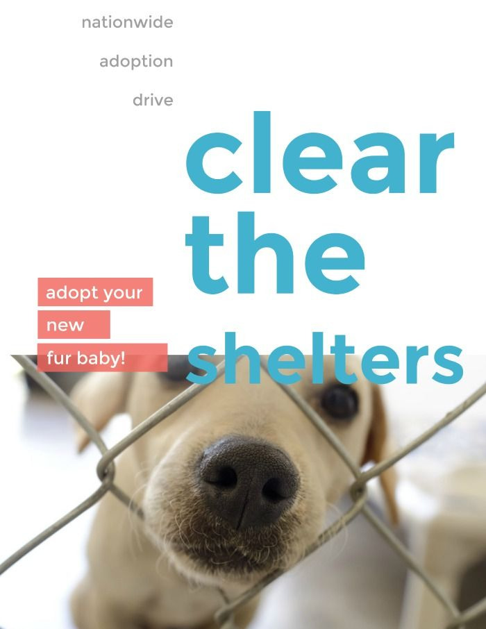 Mark Your Calendar for Clear the Shelters Adoption Drive 2019! #petadoption
