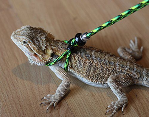 Adjustable Reptile LeashTM Harness Great for Reptiles or Small Pets - 100%  Adjustable Most Sizes (6 Feet… | Bearded dragon care, Bearded dragon, Baby  bearded dragon