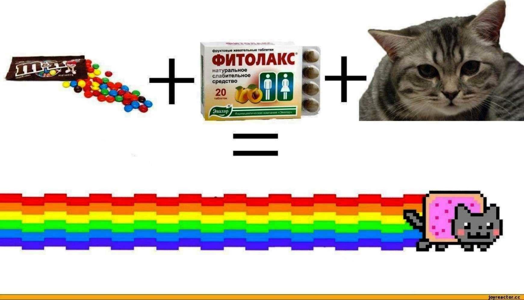 Simple Wallpaper Minecraft Cats - 2b3d007cf61a2501580aa83833424560  Pic_425330.jpg