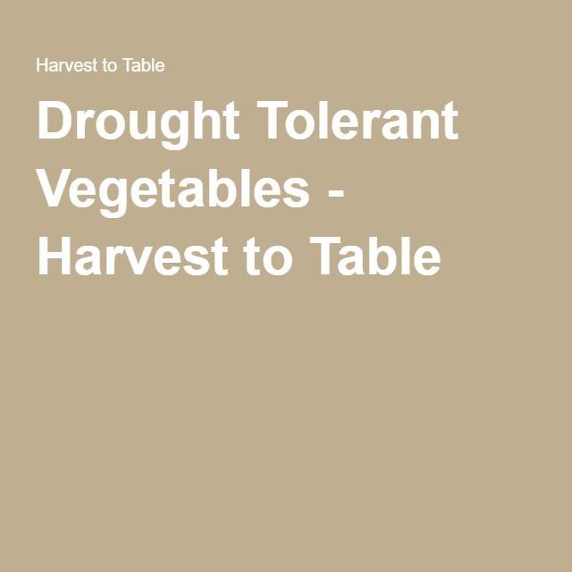 Drought Tolerant Vegetables Vegetable Harvest Dried 400 x 300