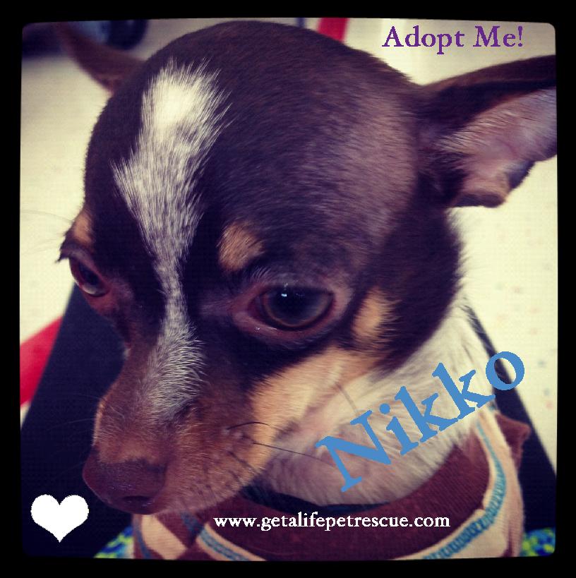 Adorable Nikko For Adoption At Www Getalifepetrescue Com Kids