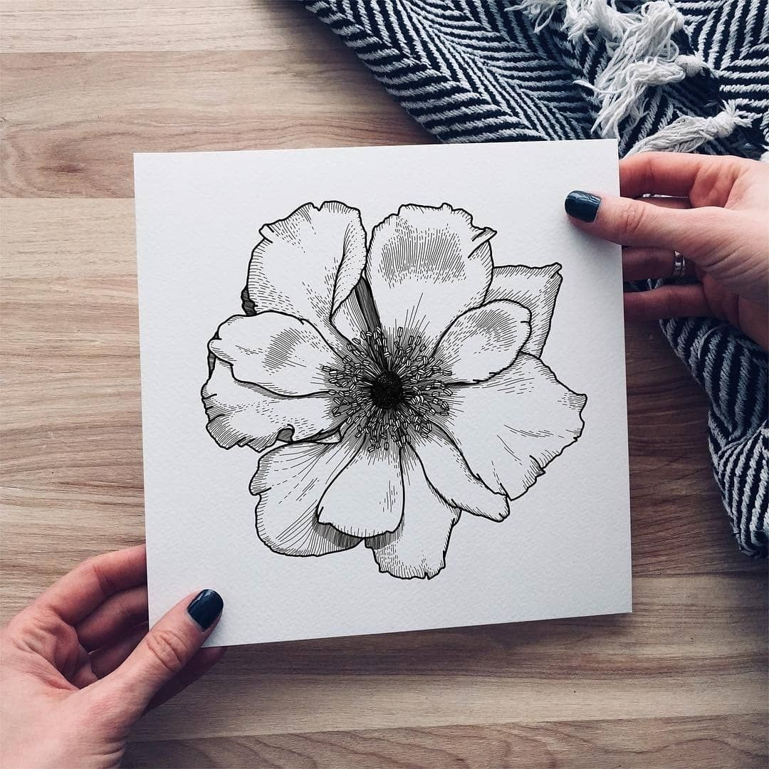 Detailed floral sh pinterest illustration drawings and art