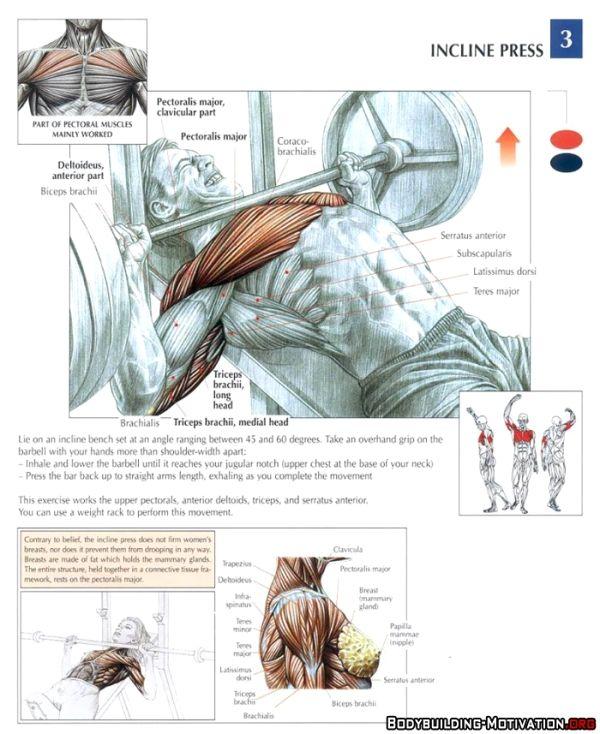 training_anatomy_chest_incline_press_2014-02-19_23-16-02.jpg (600 ...