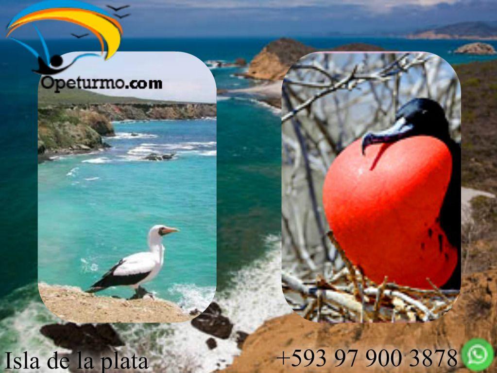Isla de la Plata - Parque Nacional Machalilla  Pertenece al Parque Nacional Machalilla. Se pueden observar parecidas especies que se encuentra en las islas Galápagos; explorar arrecifes coralinos con una gran biodiversidad de especies marinas; y disfrutar del bello paisaje que complementa las actividades que se realizan.