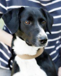 Adopt Jasmine Playful On Herding Dogs Dogs Cute Animals