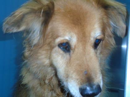 Animal Id T35473313 R Nspecies Tdog R Nbreed Tchow Chow Mix R
