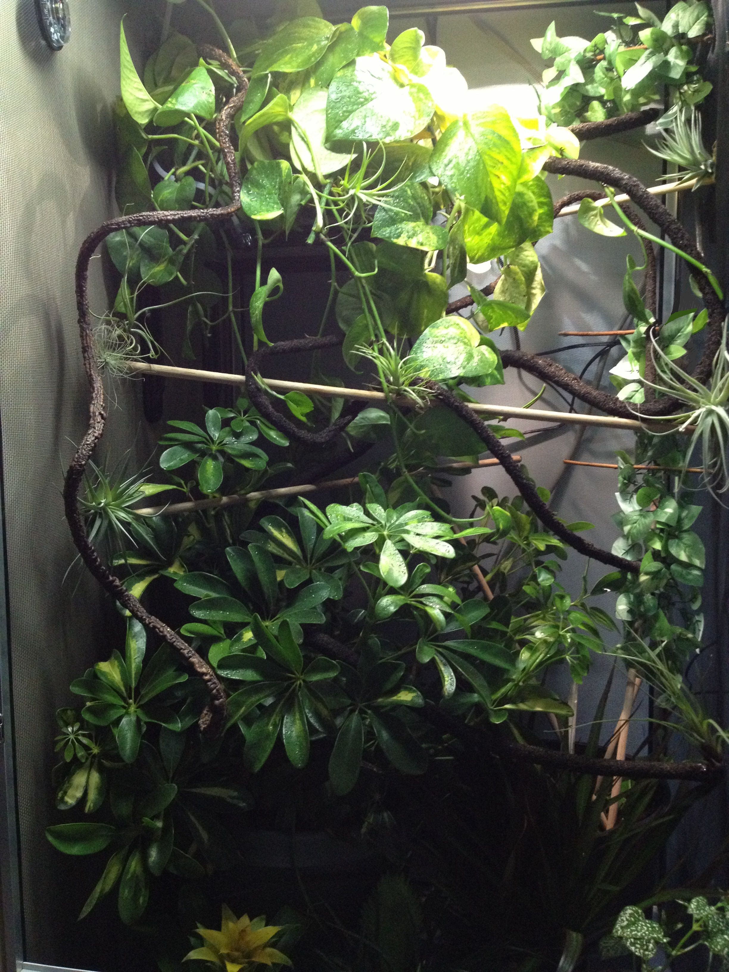 Chameleon Cage / Enclosure | Chameleon Love | Pinterest ...