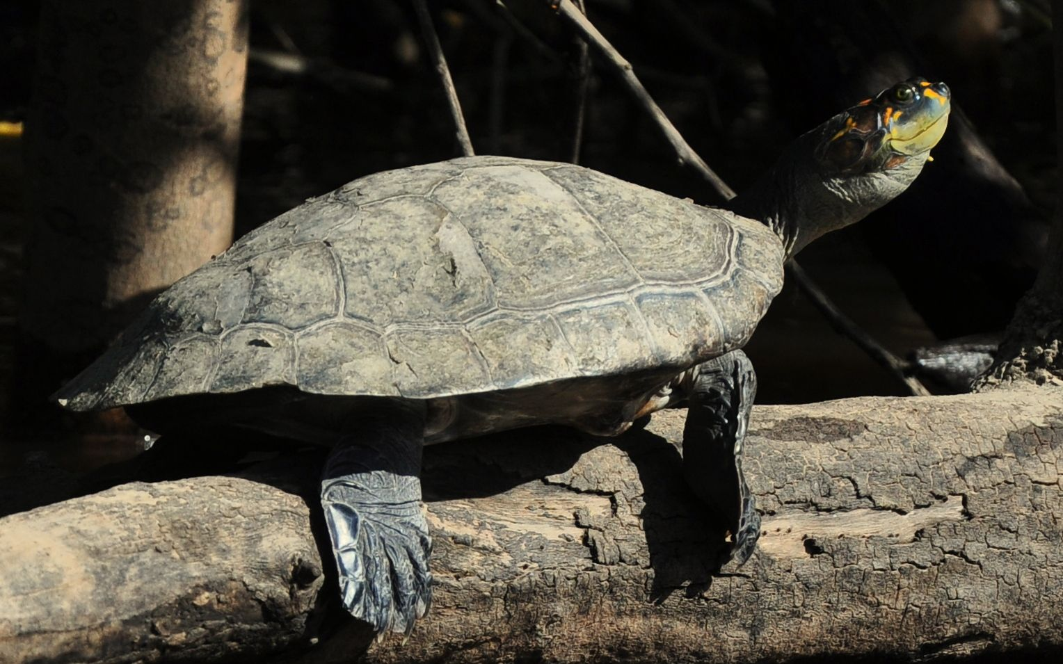 Turtles in the Amazon --- Photo taken by Esmeralda Spiteri