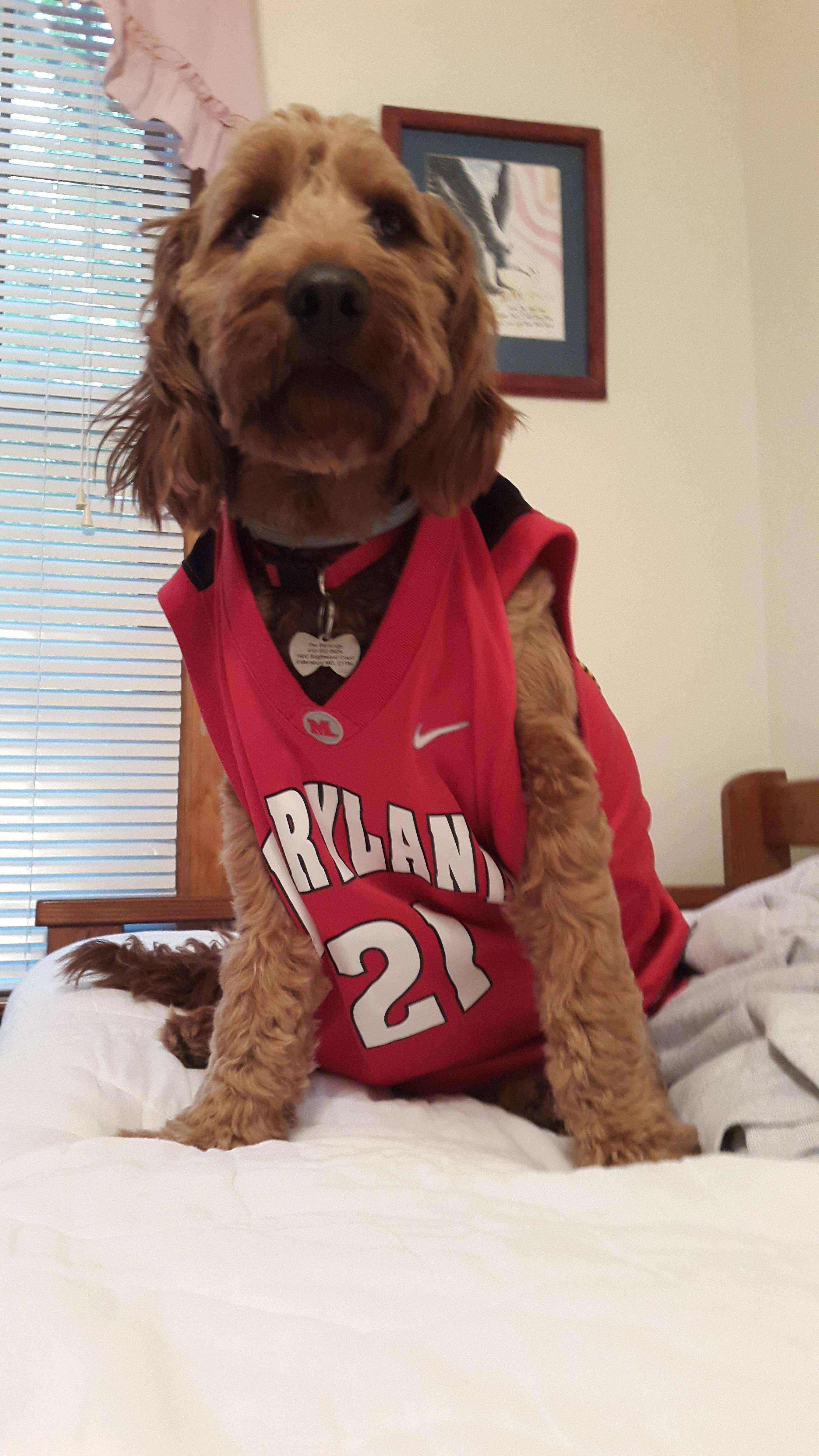 Basketball pup iftqcwr cute uc pinterest pup