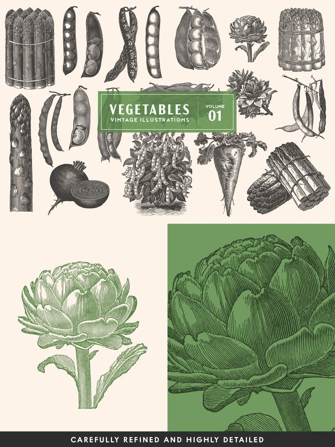Vintage Vegetable Vector Illustrations In 2020 Vegetable Illustration Illustration Vector Illustration