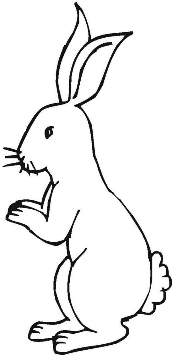 Bunnies Little Bunny Standing On His Feet Coloring Page