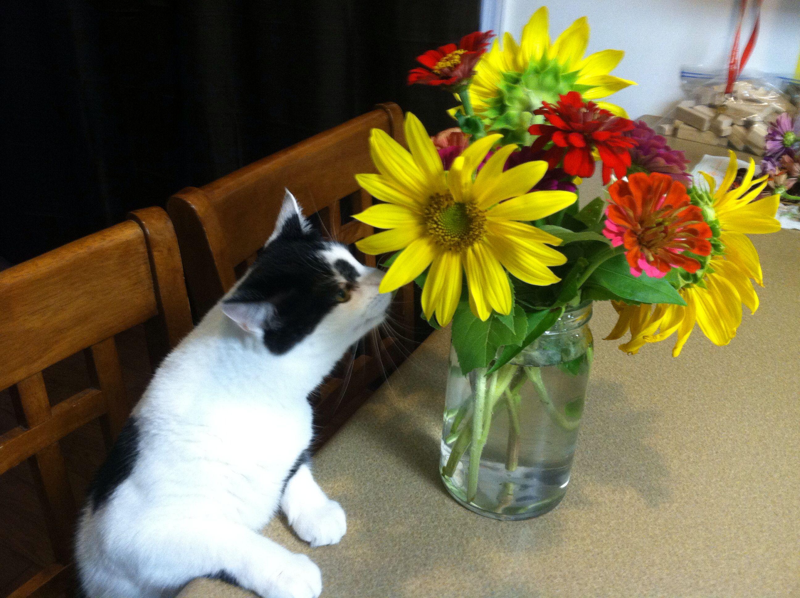 Zinnia loves zinnias and sunflowers!