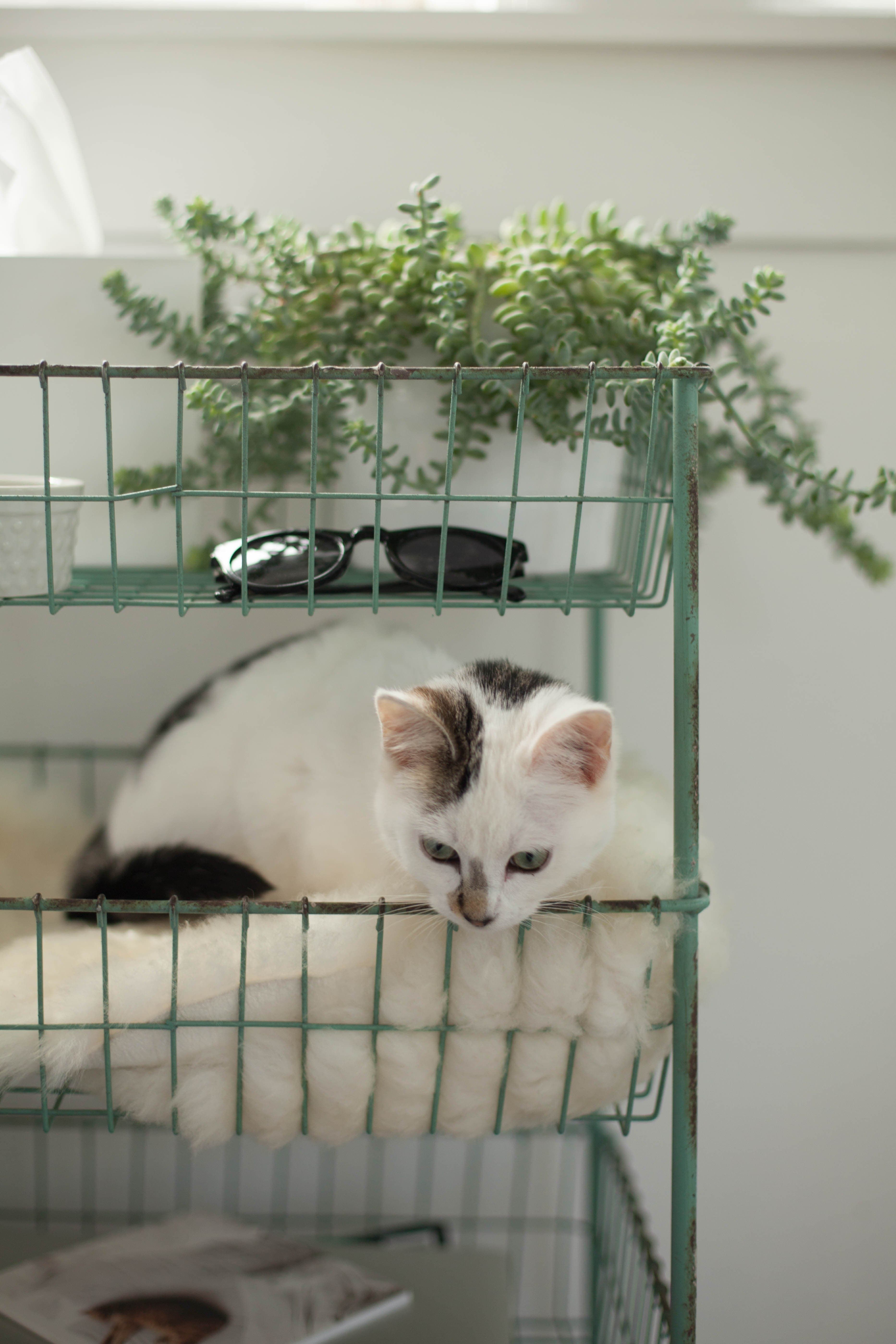 5 Pet Safe Plants (& How To Keep Your Furry Friends