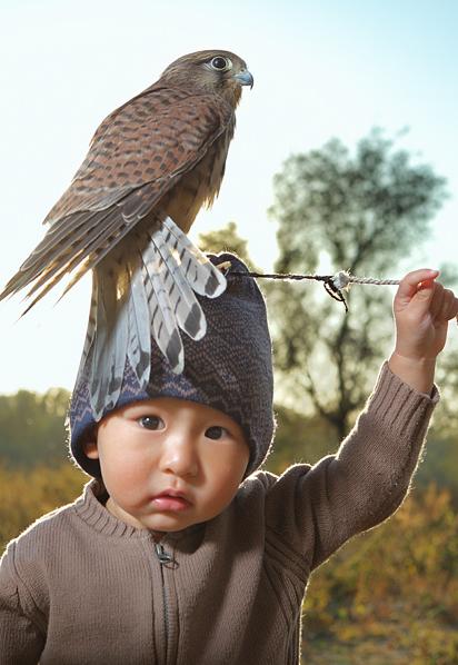 merveilleux fauconnier