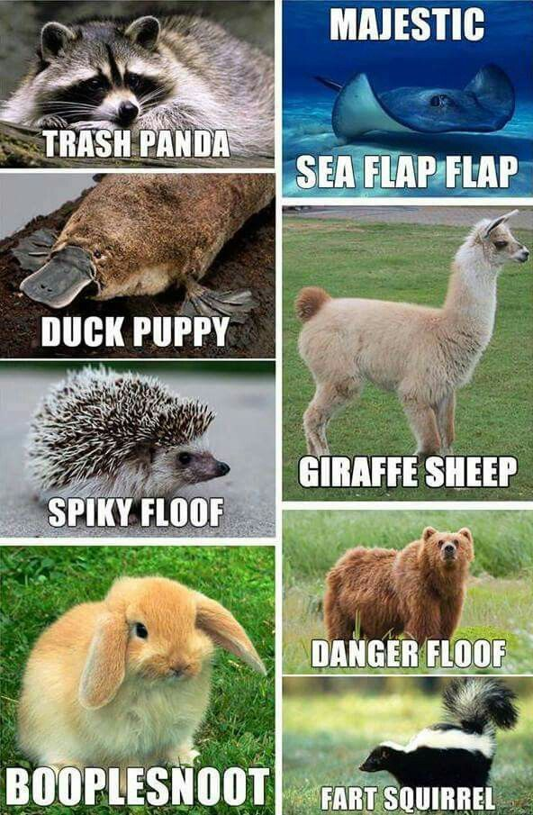 These Should Replace Their Scientific Names Funny Animal Names Cute Animal Humor Names