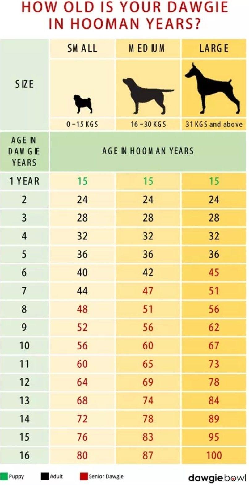 Dog Age Chart Dog Age Chart Dog Years Dog Ages