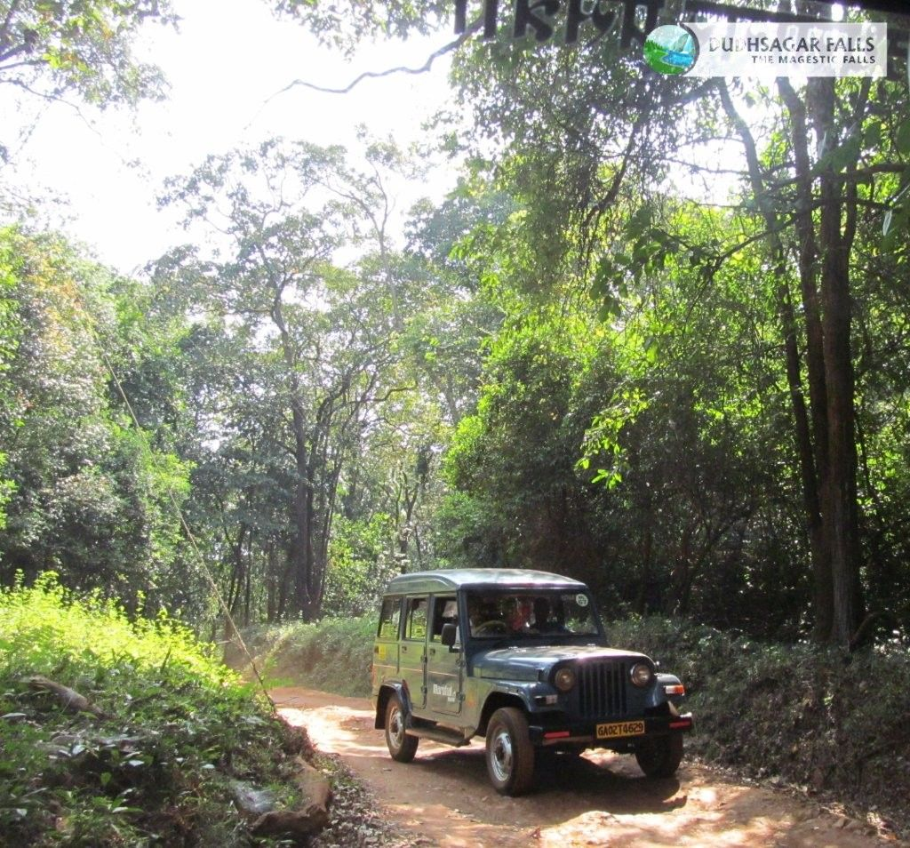 Jeep Safari To The Dudhsagar Fall Dudhsagar Falls Tours Plan