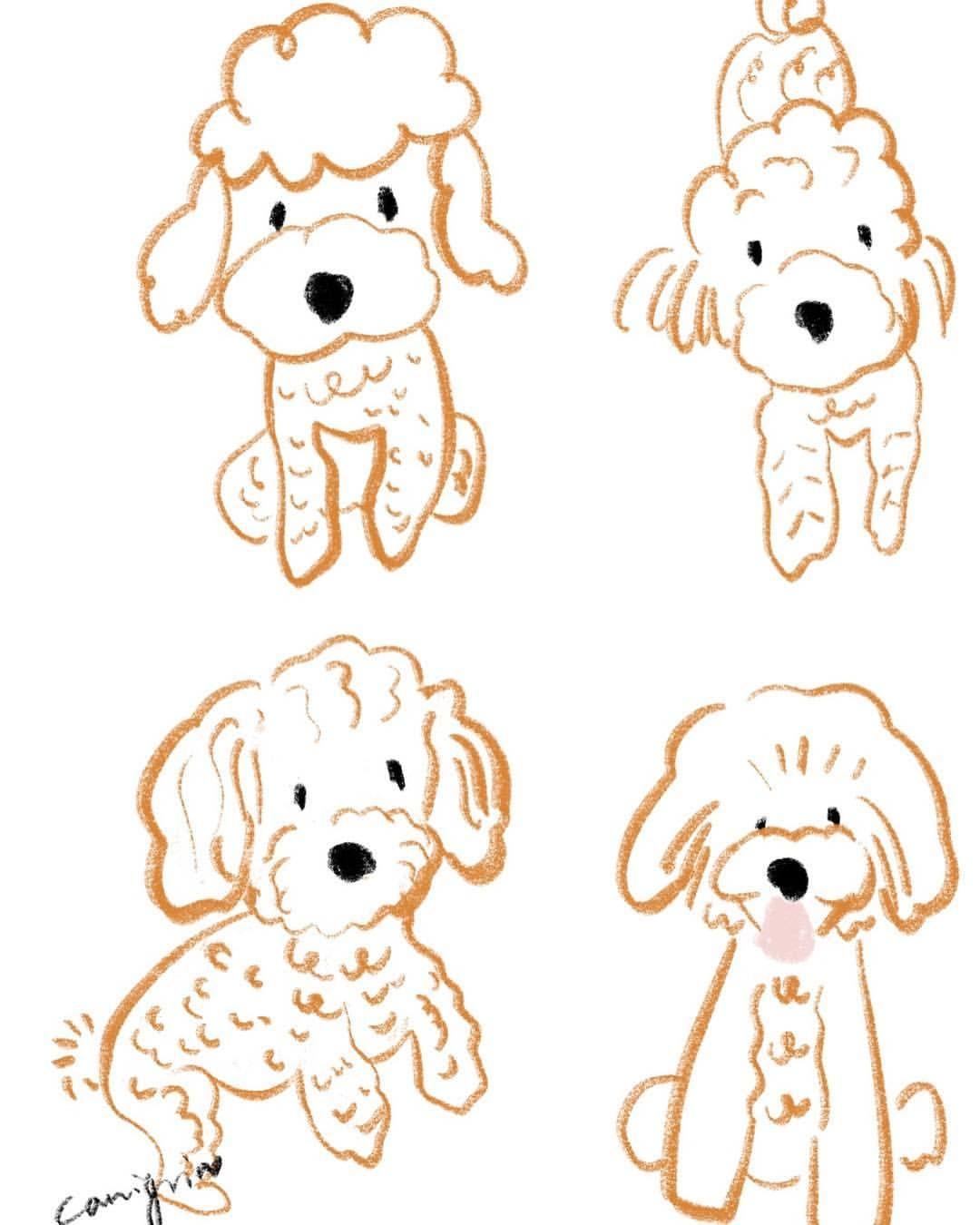 Toy Poodle Dog Illustration By Canigrin Poodle Drawing Poodle Dog Illustration